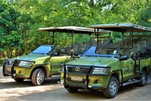 Chobe game viewing vehicles